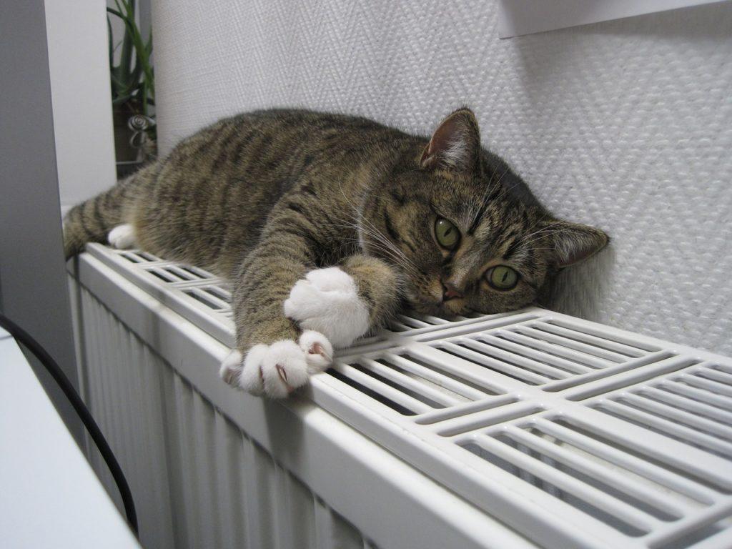 cat-1154649_1280